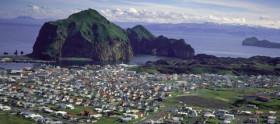 heymaey, island, iceland, fugle, sæl, natur